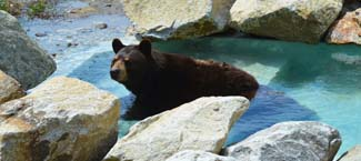 bear_pool MWP.jpg